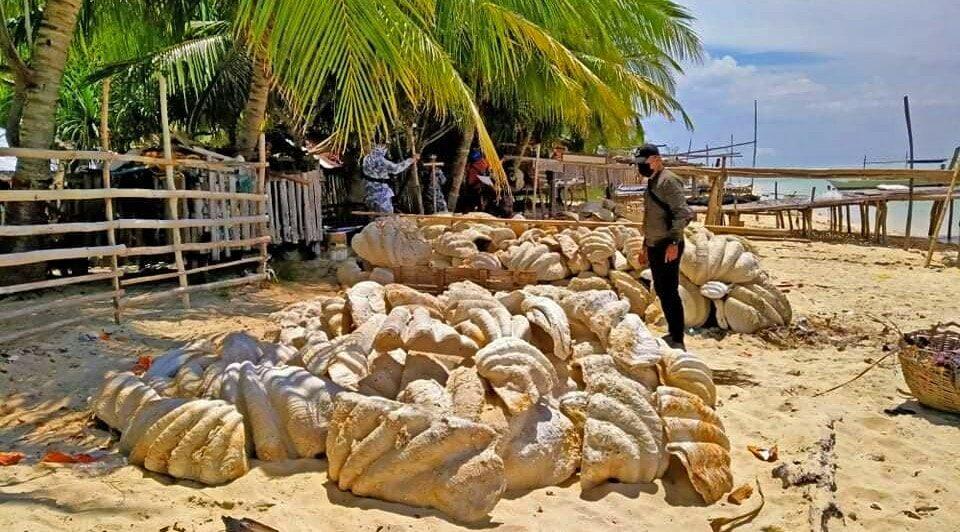 conchas almejas gigantes filipinas