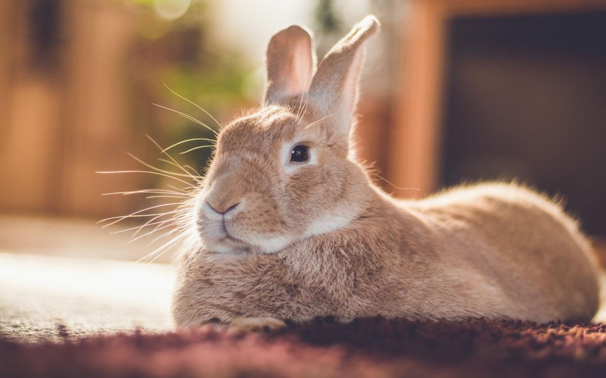 Adorable conejo terapéutico en Oracle Park le roba el corazón a más de uno