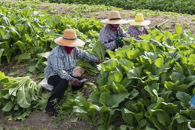 Carolina del Norte pagará $2 millones a granjero por cuarentenas de trabajadores agrícolas
