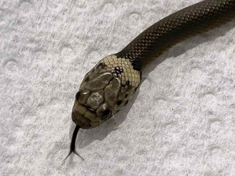 que-hace-si-le-aparece-una-serpiente-en-la-lechuga