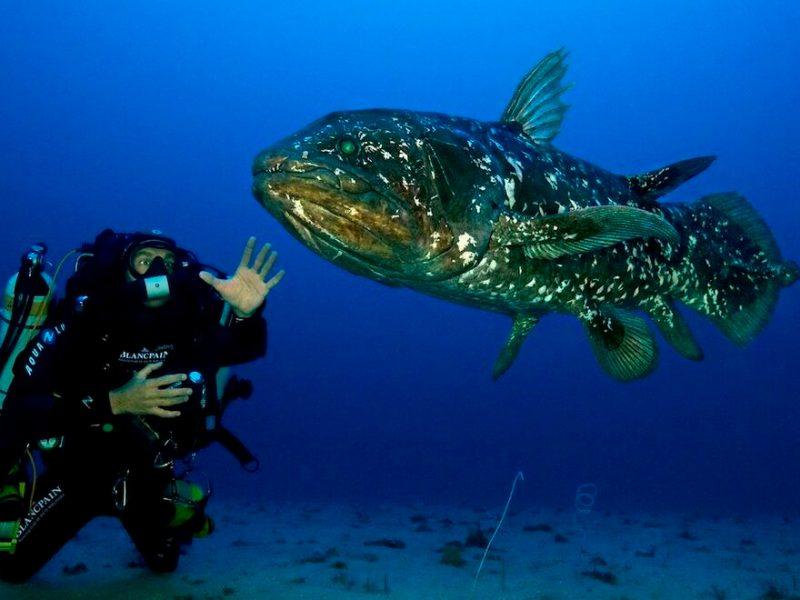 pez extinto 420 millones