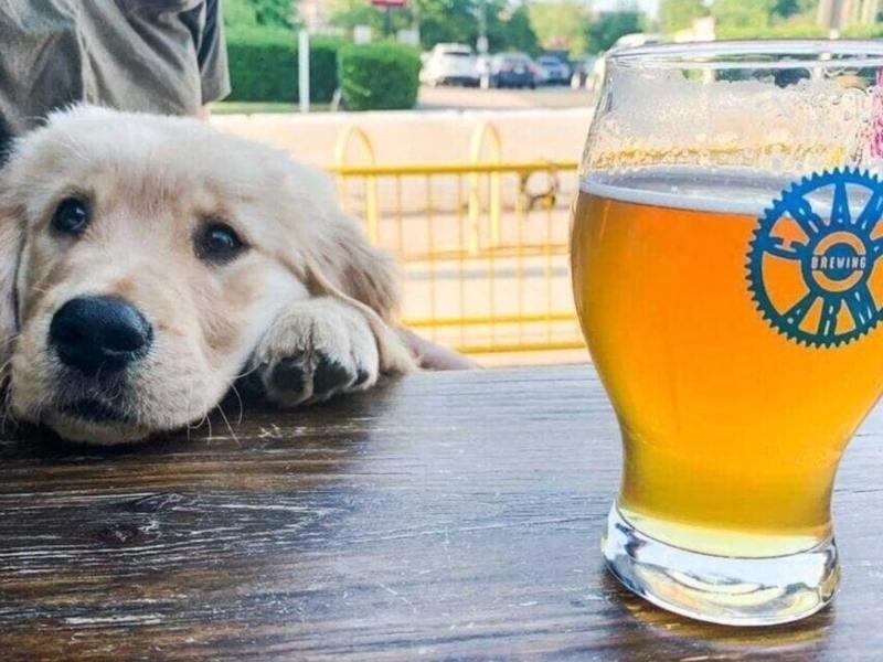 Aplicación bartenders Carolina del Norte