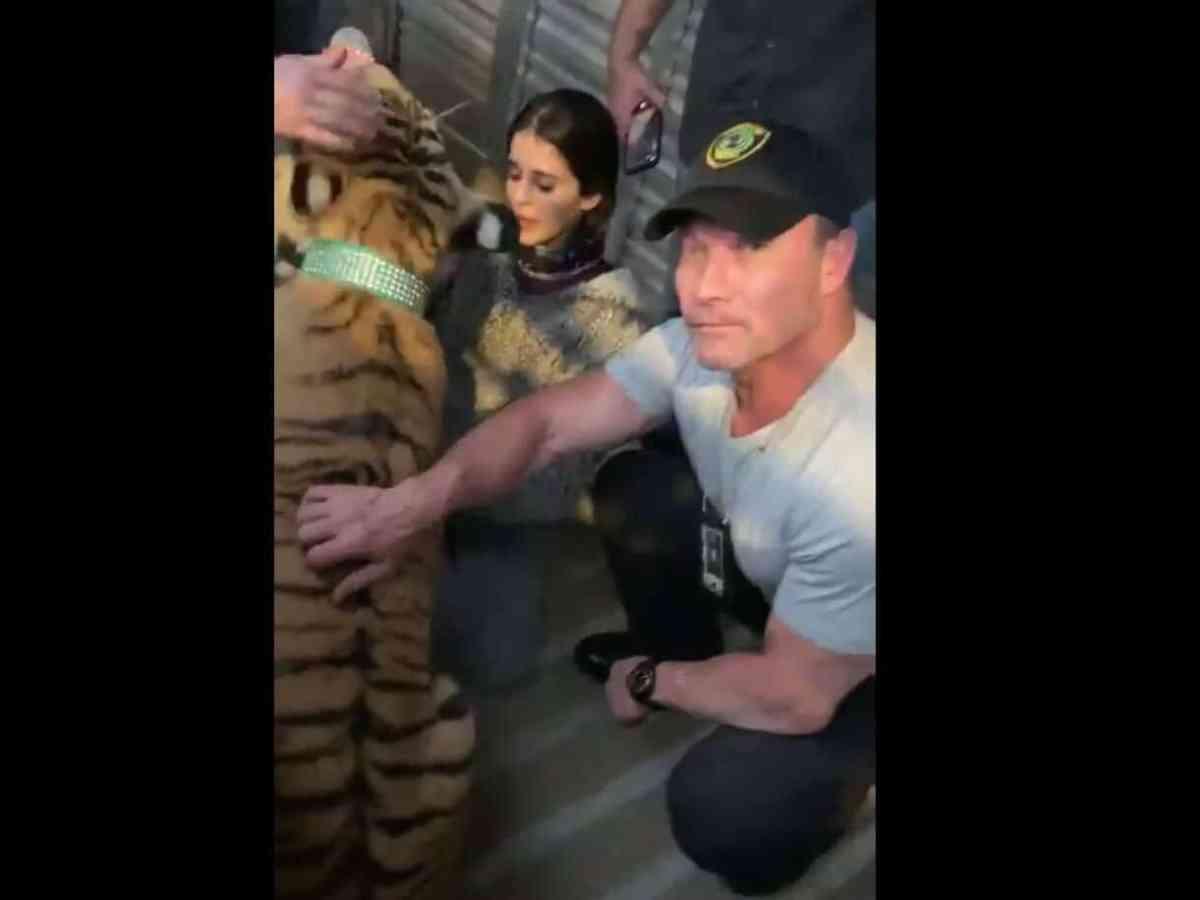 tigre houston autoridades