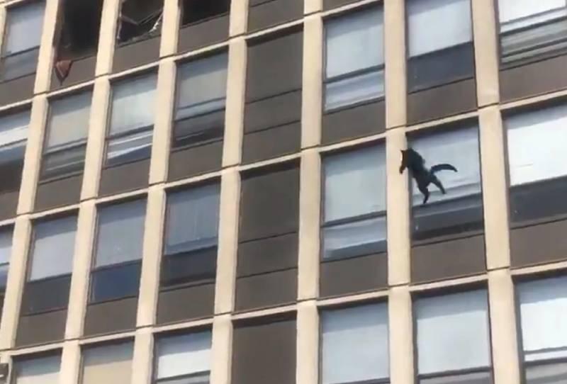 video-gata-de-chicago-sobrevive-a-salto-de-5-pisos-por-incendio