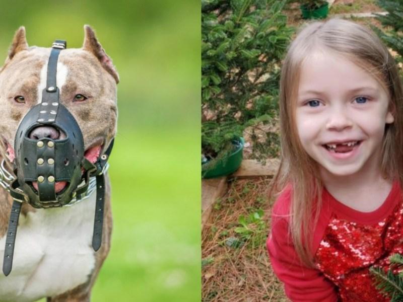 Dueños quieren recuperar a sus perros que mataron a una niña