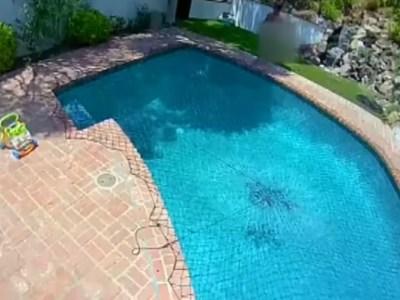 Indigente mató mascotas en casa que no era suya y se bañó desnudo en la piscina