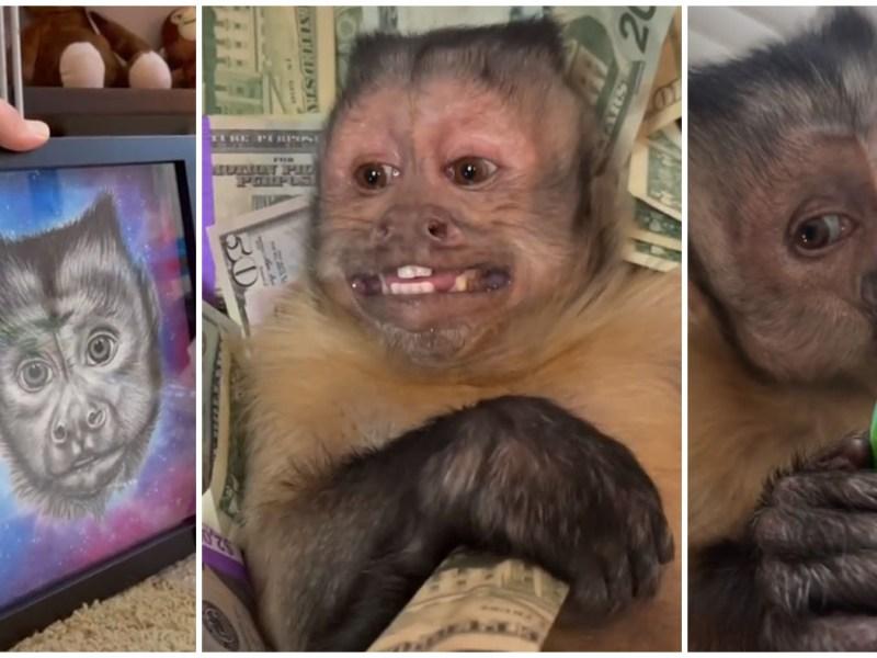 Muere George el mono de TikTok con 17 millones de seguidores