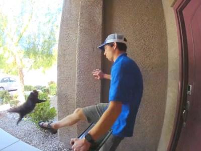 Hombre patea violentamente a un gato y genera indignación