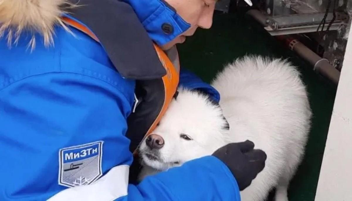 marinos-rescatan-perrita-ártico1