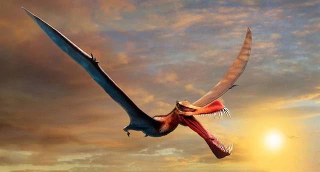 fósil dinosaurio dragón Australia