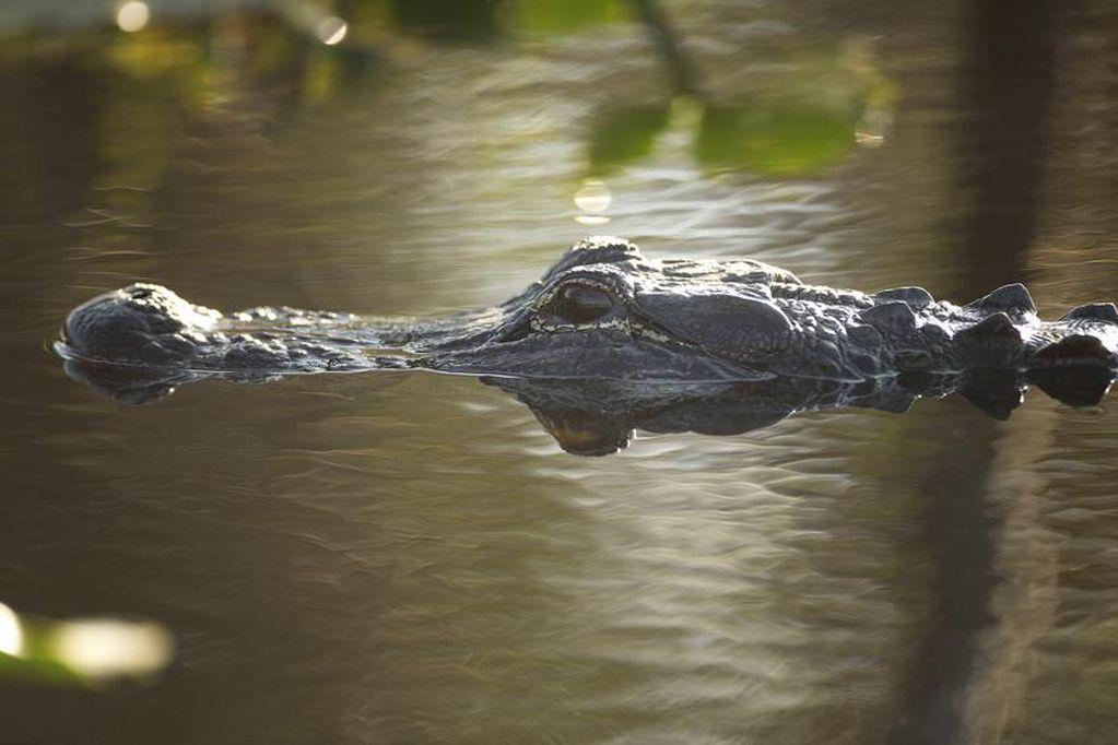 Rescatan a hombre en Australia que estaba siendo devorado por cocodrilo