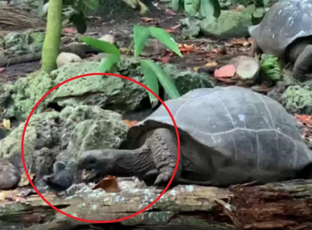 tortuga gigante pájaro video