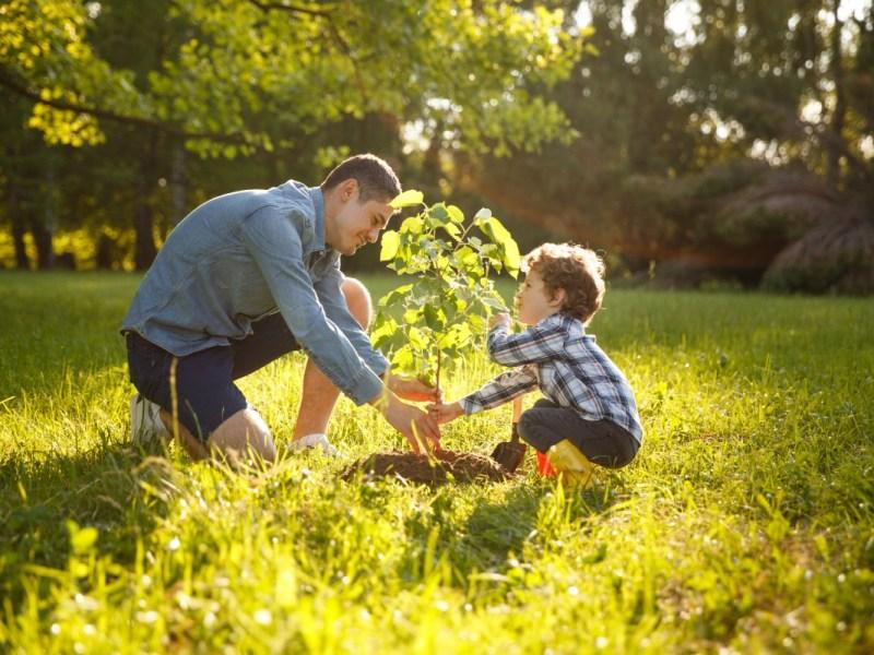¿Interesado en adoptar un árbol en Charlotte? Aquí es cómo
