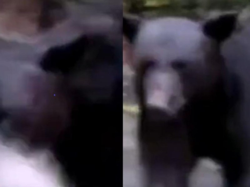 hombre gas lacrimógeno oso