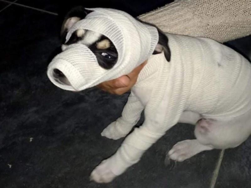 veterinaria concurso disfraces gatitos perritos