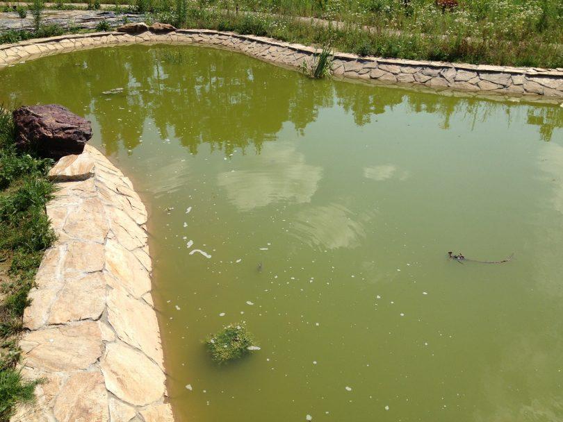 Коттедждегі тоғанды тазарту