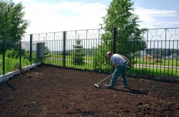 ᐉ Как правильно посадить газон своими руками, как сеять ...