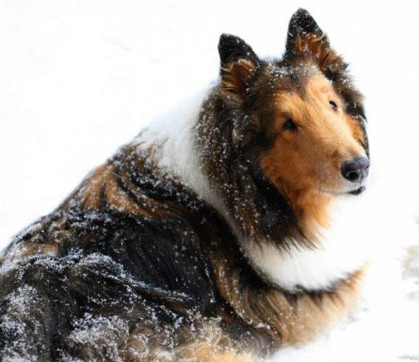 perros-32