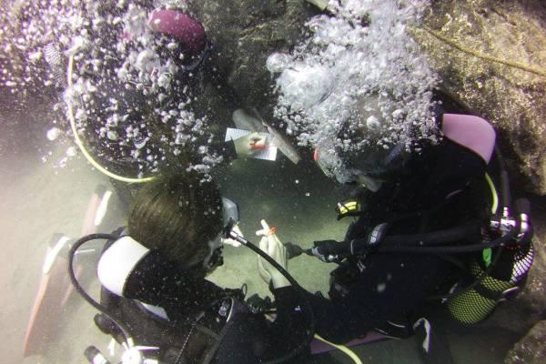 Island Watersports Geocache Dive