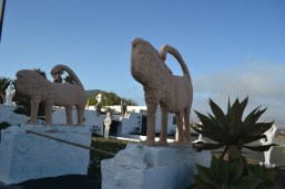 Pillimpo Lions of Teguise