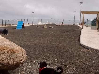 Canine Park 1