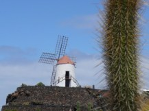 Mill y cactus_0