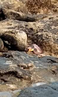 tommy turtle camouflaged in centre of photograph