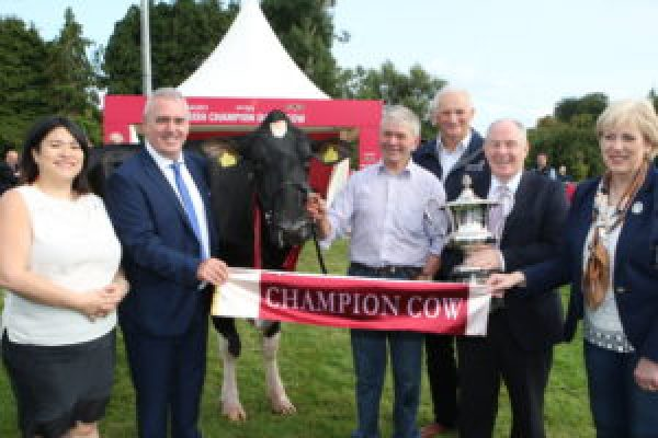 Countdown On For Tipperary To Enter All-Ireland Dairy Cow Contest