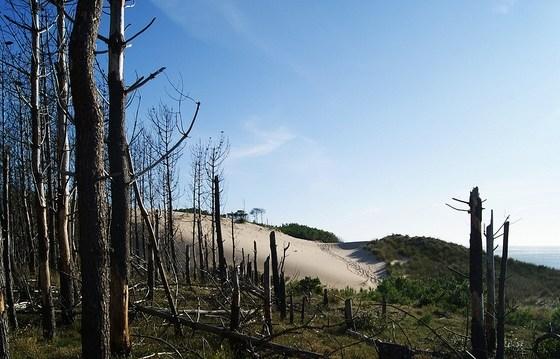 deforestacion-agroquimicos-dos-graves-consecuencias-la-agricultura-moderna