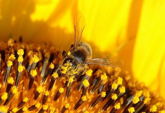 Chile: científicos hallan restos de pesticidas en miel de abejas
