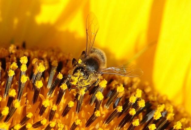 chile-cientificos-hallan-restos-pesticidas-miel-abejas