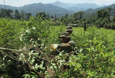 Según la ONU, Colombia sigue siendo el mayor productor de coca