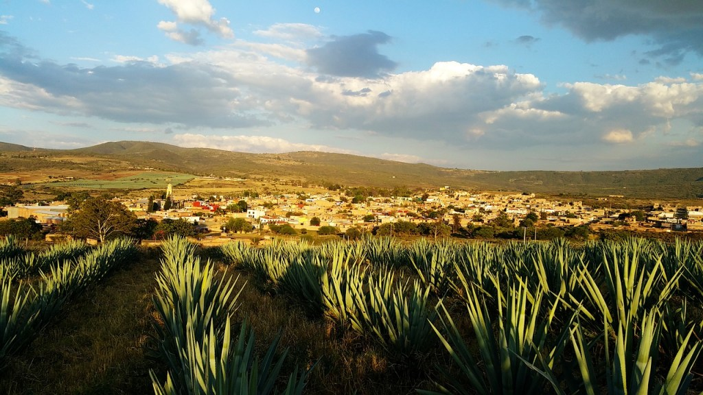 Legend of Mayáhuel, the goddess of the agave who gave away the maguey drinks
