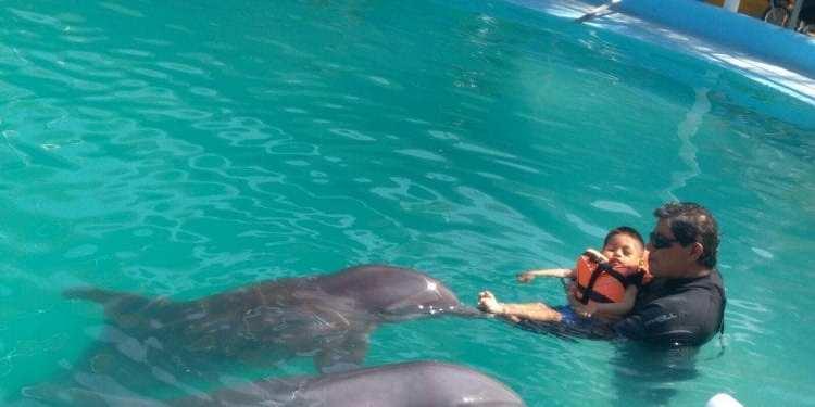 delfinoterapias