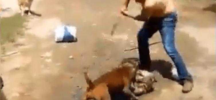 macheteó a un pitbull