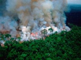 Incendios en la Selva amazonica