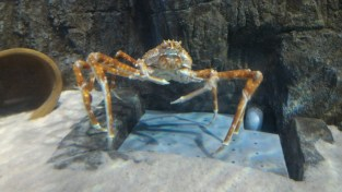 King crab.. those legs look delicious
