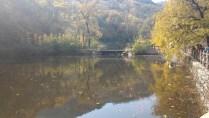 Lake with goldfish