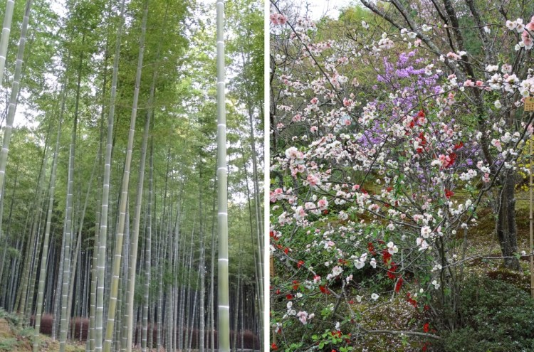 arashi 7