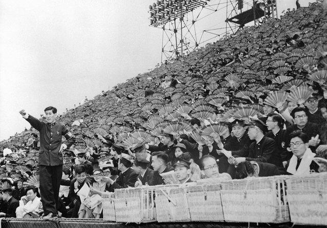 Para penonton ini membawa kipas dalam sebuah pertandingan baseball antara Universitas Waseda melawan Universitas Keio di Meiji Park, Tokyo, 1 Juni 1954, Di sebelah kiri yang berdiri adalah semacam pemandu sorak yang memandu para suporter yang membawa kipas yang diwarnai sesuai dengan warna almamater mereka. (Photo by AP Photo via The Atlantic)