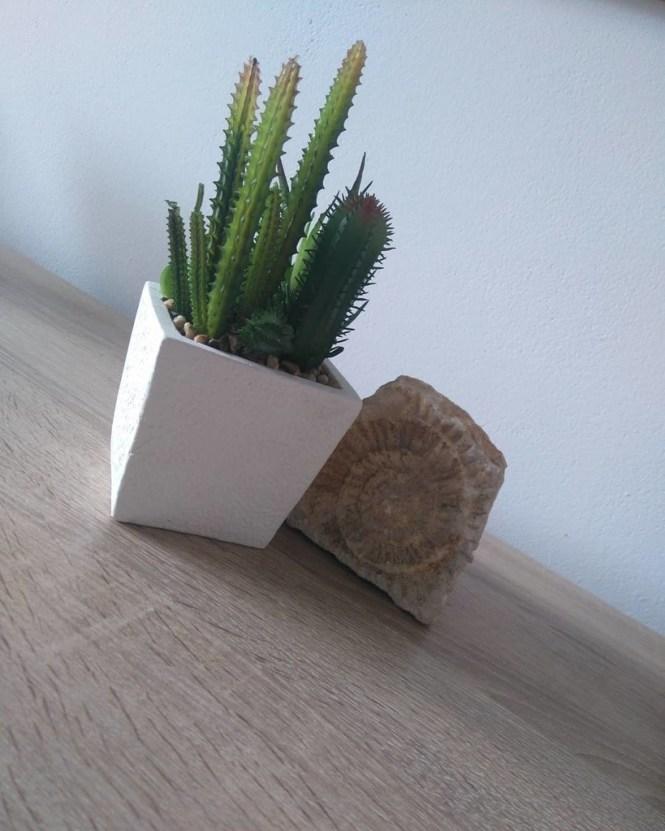 Ini Dia Fungsi Tanaman Kaktus Ditaruh Di Kamar!
