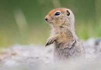 20 Fakta Unik Tentang Hibernasi Mamalia