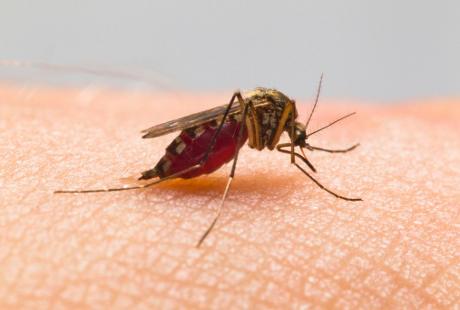 8 Fakta Unik Tentang Gigitan Nyamuk