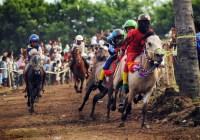 Fakta Unik Joki Cilik Pacuan Kuda Tradisional Indonesia