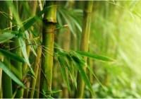 Masyarakat Indonesia Dan Pohon Bambu Yang Tak Terpisahkan