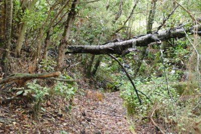 Umgestürzter Baum auf Kanalwanderung