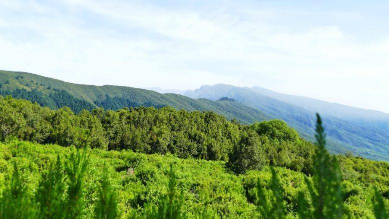 Cumbre La Palma - Wanderlust