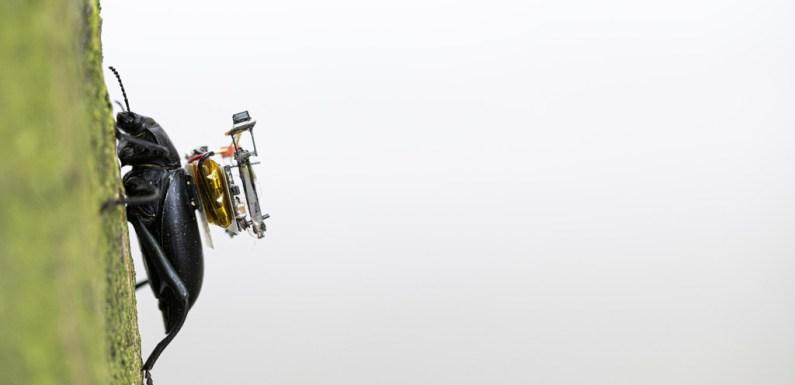 Desarrolladores crean un sistema de foto y vídeo tan pequeño que puede ser cargado por un escarabajo