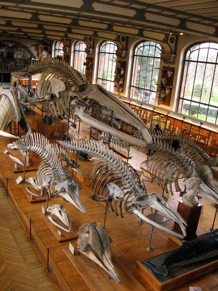 Le Muséum d'Histoire Naturelle de Paris