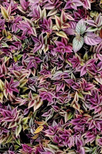 Plantes au Jardin de Balata